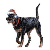 Rottweiler with santa claus hat Royalty Free Stock Image