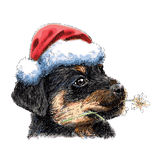 Rottweiler with santa claus hat Stock Photos
