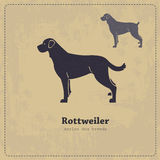 Rottweiler silhouette vintage poster Royalty Free Stock Photos