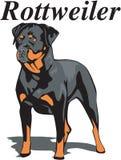 Rottweiler vektorillustration royaltyfri illustrationer