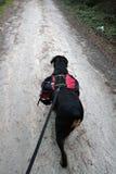 Rottweiler Wanderung Stockbild