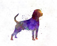 Rottweiler in watercolor Royalty Free Stock Image