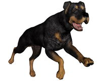 Rottweiller dog running - 3D render Royalty Free Stock Photos