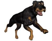Rottweiller dog running - 3D render Royalty Free Stock Photos