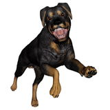 Rottweiller dog runnning - 3D render Stock Images