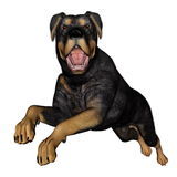 Rottweiller dog runnning - 3D render Stock Photo