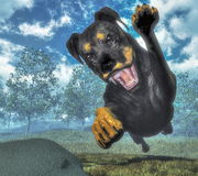 Rottweiller dog runnning - 3D render Royalty Free Stock Image