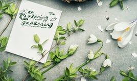 Rotulação de jardinagem da mola com a vária planta da primavera: Lírio do vale, das flores do açafrão e dos galhos da mola Fotos de Stock