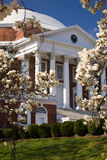 Rotunda at UVA in spring. University of Virginia Rotunda, designed by Thomas Jefferson, in springtime Royalty Free Stock Image
