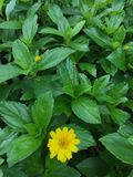 Rotura de la flor Imagen de archivo libre de regalías
