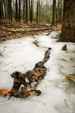 Rotura en el hielo Fotografía de archivo libre de regalías