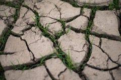 Roturas de la hierba a través de las grietas de la sequía Imágenes de archivo libres de regalías
