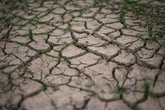 Roturas de la hierba a través de las grietas de la sequía Imagen de archivo libre de regalías