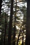 Roturas de Sun a través Fotos de archivo libres de regalías