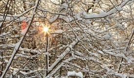 Roturas de Sun a través de las ramas de árbol nevadas Imágenes de archivo libres de regalías