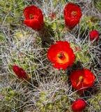 Rotwein-Schalen-Blüten lizenzfreie stockfotografie
