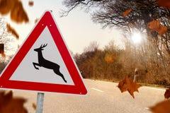 Rotwildüberfahrt im Herbst Stockfotografie