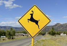 Rotwildüberfahrtzeichen auf der Straße Stockbilder
