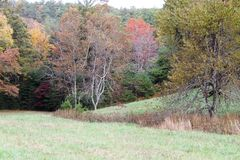 Rotwild auf dem Gebiet von Bäumen mit Fall färbten Blätter Stockbilder