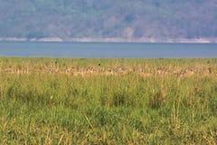 Rotwild auf Flussufer Lizenzfreie Stockfotos