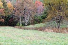 Rotwild, die auf einem Gebiet mit Forest Backdrop einziehen Lizenzfreies Stockfoto
