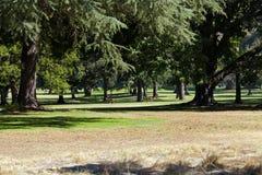 Rotwild, die durch Bäume auf Golfplatz durchfahren Stockfoto