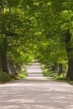 Rotwild, die unter einem Kabinendach der grünen Bäume weiden lassen lizenzfreies stockbild