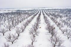 Rotwild in einem Winter stockfotos