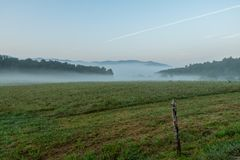 Rotwild Graze In Morning Fog lizenzfreies stockfoto