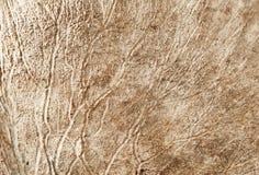 Rotwild-Hörner Makro Stockbild
