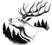 Rotwild im Wald lizenzfreie abbildung