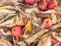 Rotwild-Mais u. Äpfel Stockfotografie