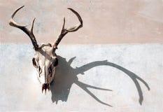 Rotwild-Schädel und Schatten Stockbilder