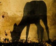 Rotwild-Schatten Stockbild