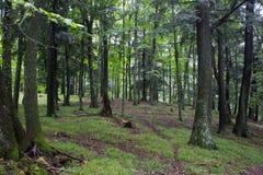 Rotwild-Weg durch einen Wald Stockfotos