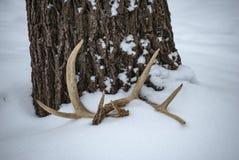 Rotwildgeweihe unter einem Baum im Schnee stockfotografie
