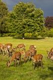 Rotwildpark Lizenzfreie Stockfotos