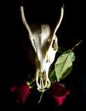 Rotwildschädel mit Blumen Lizenzfreie Stockfotos