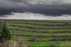Rotwildschattenbilder auf dem Feld Stockfoto