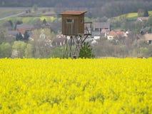 Rotwildstand auf dem gelben Gebiet Lizenzfreies Stockbild