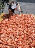 Roubando o camarão Fotos de Stock Royalty Free