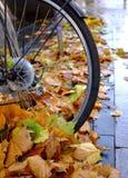 Roue de bicyclette parmi des feuilles d'automne Images libres de droits