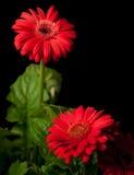 Rouge Photographie stock libre de droits