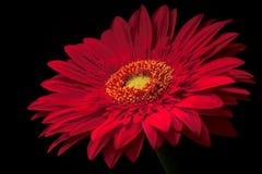 Rouge Image libre de droits