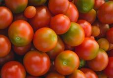 Rouge avec les tomates vertes Photographie stock libre de droits