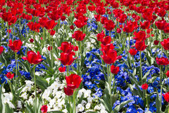 Rouge, blanc et bleu Images libres de droits