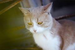 Rouge chaud de chat du soleil d'été Photographie stock libre de droits