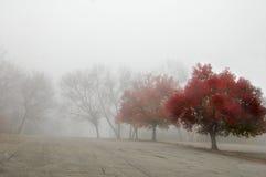 Rouge d'automne photos stock