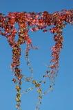 rouge d'automne Image libre de droits