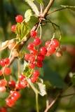 rouge de corinthe Photos libres de droits
